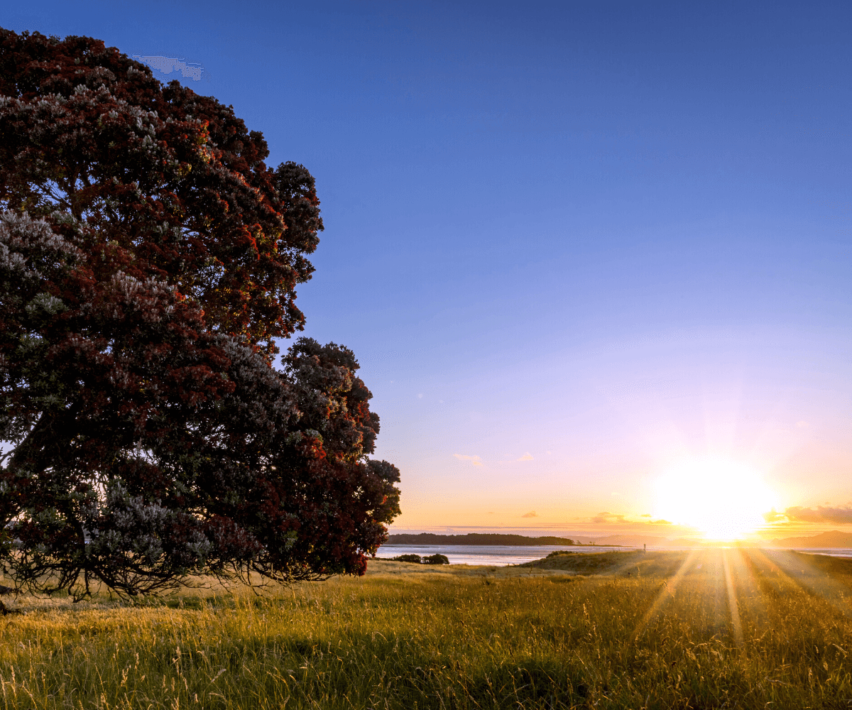 Why Is New Zealand the First Country to 'See' the Light?